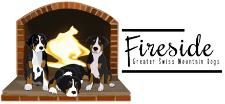 Fireside Greater Swiss Mountain Dogs